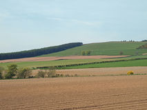 Potatoe field and pasture east Scotland in may Royalty Free Stock Photography