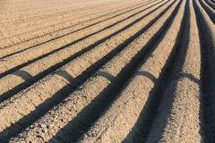 Potatoe field Royalty Free Stock Image