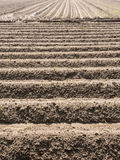 Potatoe field in spring. Potato field with plowed rows in the spring Royalty Free Stock Photography
