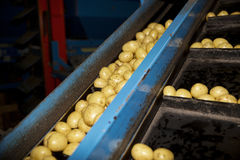 Potatoe Industry Stock Images