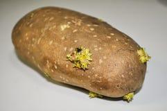 Potatoe Stock Images
