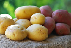 Potatoes . Stock Images