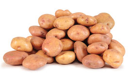 Potatoes. royalty free stock photo