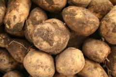 Potatoes. Fresh dug out potatoes (harvest Royalty Free Stock Photo