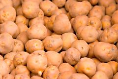 Potatoes. Spuds Royalty Free Stock Photography