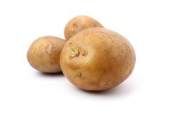 Potatoes royalty free stock photography