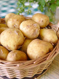 Potatoes. A pile of fersh potatoes Stock Images