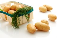 Potatoes. Stock Images