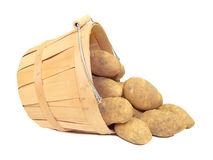 Potatoes. In a wooden farmer's basket, isolated Royalty Free Stock Photos
