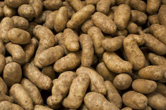 Potatoes. In a pile at a farm stand Royalty Free Stock Photos