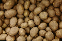 Potatoes. Many  freshly dug up from the ground Stock Photos