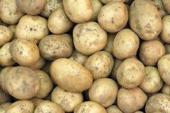 Potatoes. The background of many potatoes Royalty Free Stock Photos