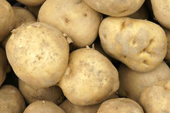 Potatoes. The background of many potatoes Royalty Free Stock Images