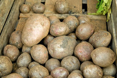 Potatoes. Old potatoes in a wooden box Royalty Free Stock Photography