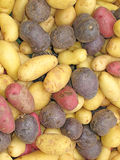 Potatoes. Pile of different colored potatoes at the farmers market Stock Images