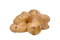 Potatoes. Raw Jersey Royal potatoes shot against a white background Royalty Free Stock Image