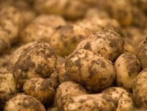 Potatoes. Detail of pile potatoes Royalty Free Stock Photography