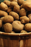 Potatoes. Basket full of garden fresh potatoes Royalty Free Stock Photos