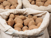 Potatoes. Bags with potatoes isolated on white background Royalty Free Stock Images
