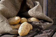 Potatoes 4. Potatoes spilling from a sack. Rustic setting Stock Images