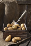 Potatoes 6 Stock Images