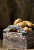 Potatoes 8. Potatoes freshly harvested into a wooden crate, against sack-cloth and wooden background Royalty Free Stock Photos