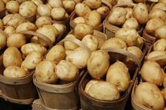 Potatoes. Baskets of potatoes royalty free stock photography
