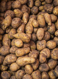 Potatoes as background. Royalty Free Stock Photos