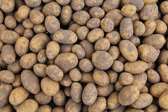 Potatoes background Royalty Free Stock Photography