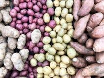 Potatoes background. Several types of Potatoes make a Potato background royalty free stock photo