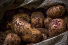 Potatoes in a bag. On the counter in the sale stock image