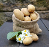 Potatoes in the bag Stock Photos