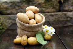 Potatoes in the bag Royalty Free Stock Photography