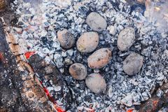 Potatoes baked in the coals on the fire in the spring forest royalty free stock photos