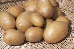 Potatoes in the basket Stock Image