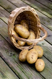 Potatoes. Stock Photography