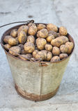 Potatoes in the basket after harvesting.Fresh uncooked potatoes Stock Images