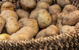 Potatoes in basket Royalty Free Stock Images