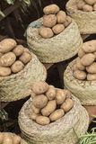 Potatoes in baskets on a vegetables market Stock Images