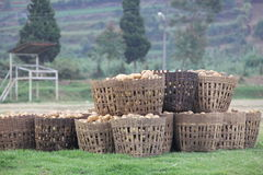 Potatoes in the baskets Royalty Free Stock Images