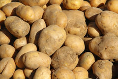 Potatoes at bazaar Royalty Free Stock Images