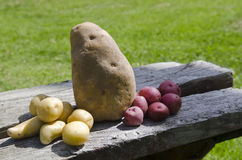 Potatoes on bench Royalty Free Stock Image