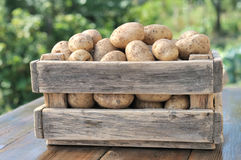 Potatoes in a box. Royalty Free Stock Photo