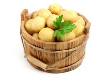 Potatoes in a bucket. Stock Image