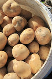 Potatoes in a bucket Royalty Free Stock Photography
