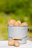 Potatoes in bucket. In summer Royalty Free Stock Photo