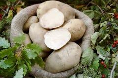 Potatoes in a burlap sack Royalty Free Stock Image