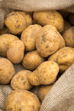Potatoes in burlap sack Stock Image
