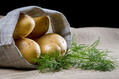 Potatoes in a canvas bag with dill Stock Image