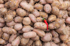 Potatoes and chili pepper Stock Images